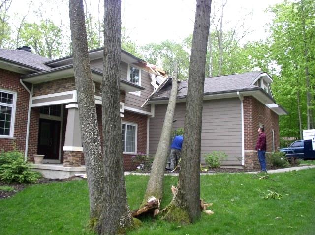 Tree on House Tree Jack