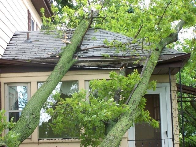 Saving the window Tree Jack
