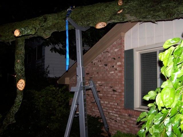 Night Photos Tree Jack